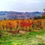 Vigne - Terre di Rovescala - Az. Agr. Varese