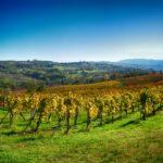 Vigna - Terre di Rovescala - Az. Agr. Varese